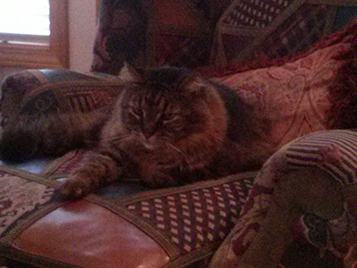 Cat sitting on the sofa